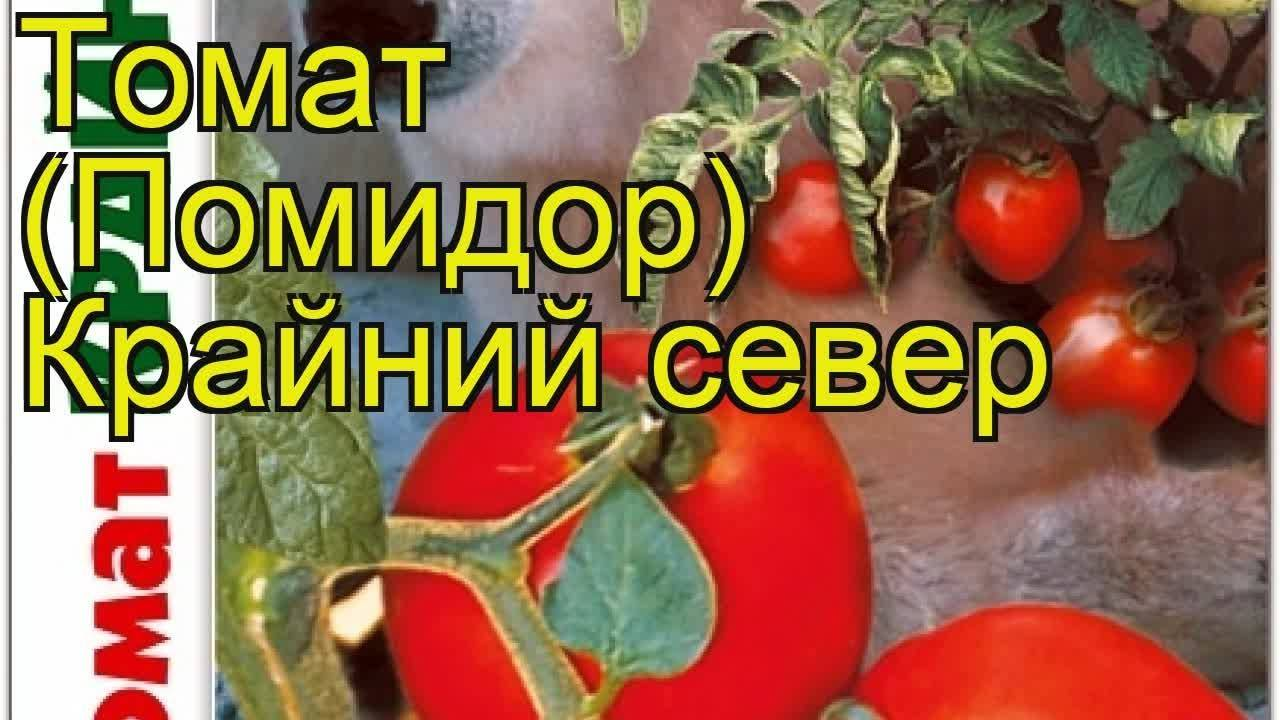 Томат крайний север — описание сорта, отзывы, урожайность