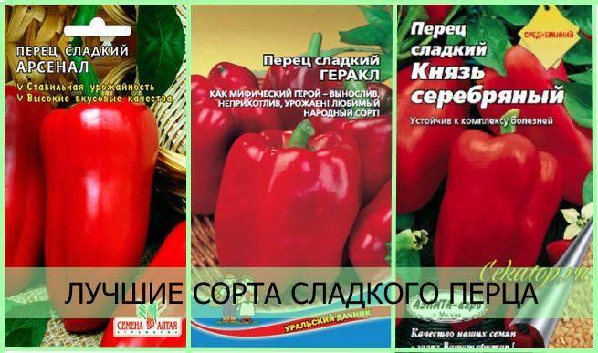 Лучшие сорта перцев для средней полосы россии