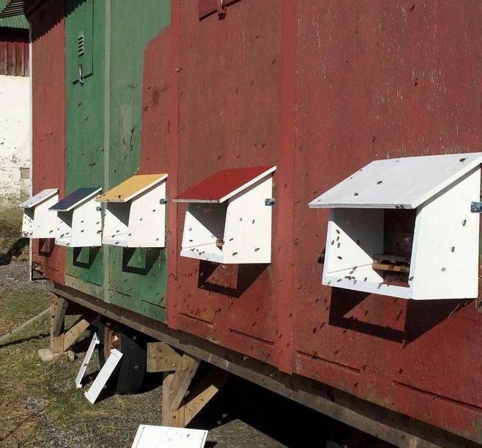 Кассетный павильон для пчел: как сделать своими руками + чертежи
