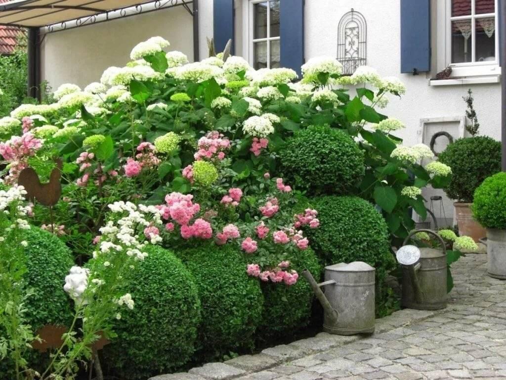 Гортензия: сколько цветет, на какой год после посадки, фото