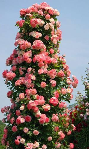 Розы в ландшафтном дизайне (52 фото): правильное и красивое оформление сада