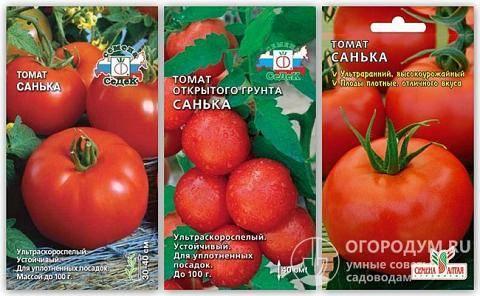 Томат санька (санек): сортовые характеристики и преимущества, технология выращивания рассады, способы увеличения урожайности, советы, отзывы