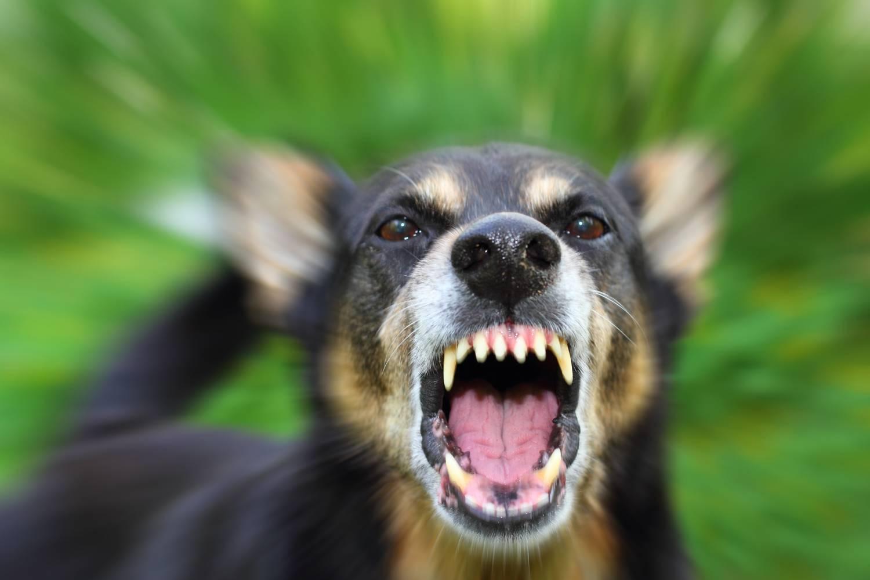 Ветеринарные правила при бешенстве животных