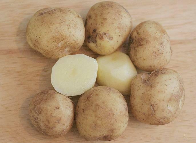 Сорт картофеля «леди клэр» («леди клер»): характеристика, урожайность, отзывы и фото