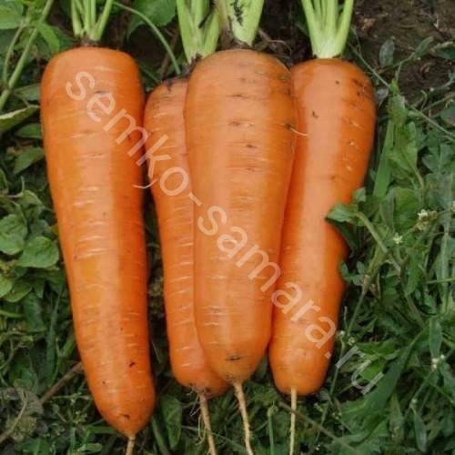 Морковь канада f1: описание, подробная характеристика, отличительные особенности, история происхождения, преимущества и недостатки и правила выращивания культуры