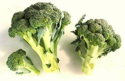 Сорта брокколи: 7 видов и 5 лучших гибридов