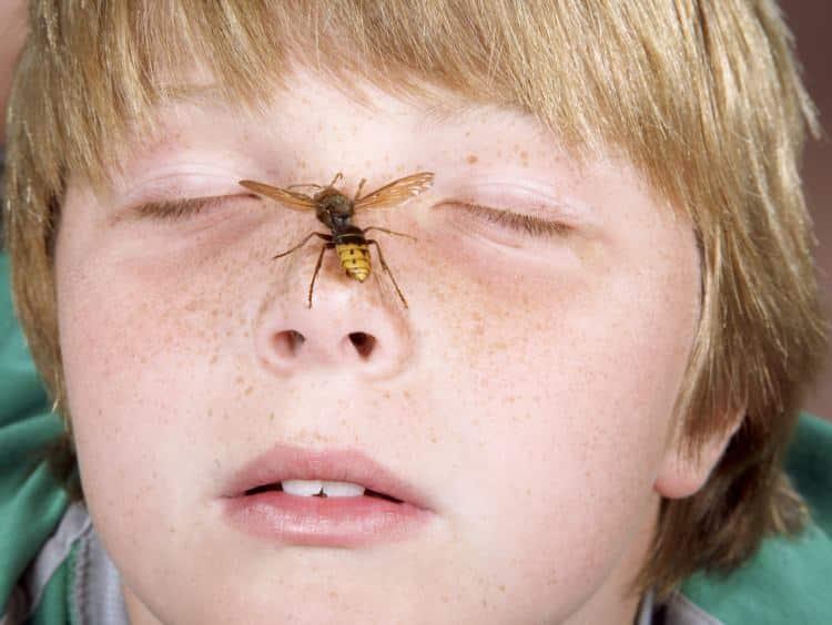 Что делать, если пчела укусила в голову, глаз, шею, руку, палец, ногу
