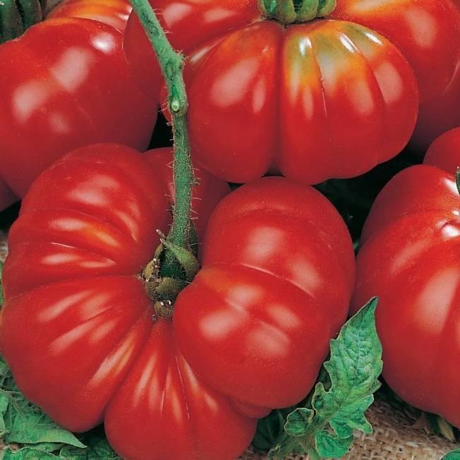 Сорт томата розмарин f1: описание, посадка, особенности выращивания и ухода