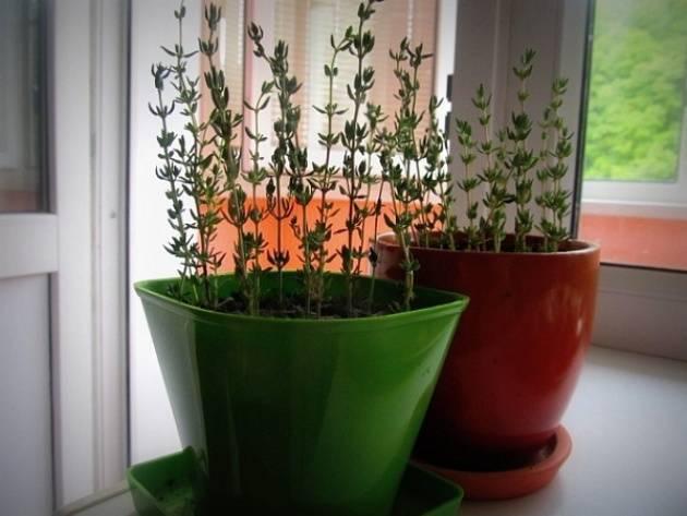 Семена гортензии — как выглядят и можно ли из них вырастить рассаду дома