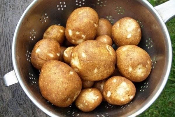 Картофель киви: характеристика сорта, отзывы, особенности выращивания и ухода