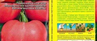 Выращиваем ранний томат «волгоградский скороспелый 323»: особенности и фото сорта