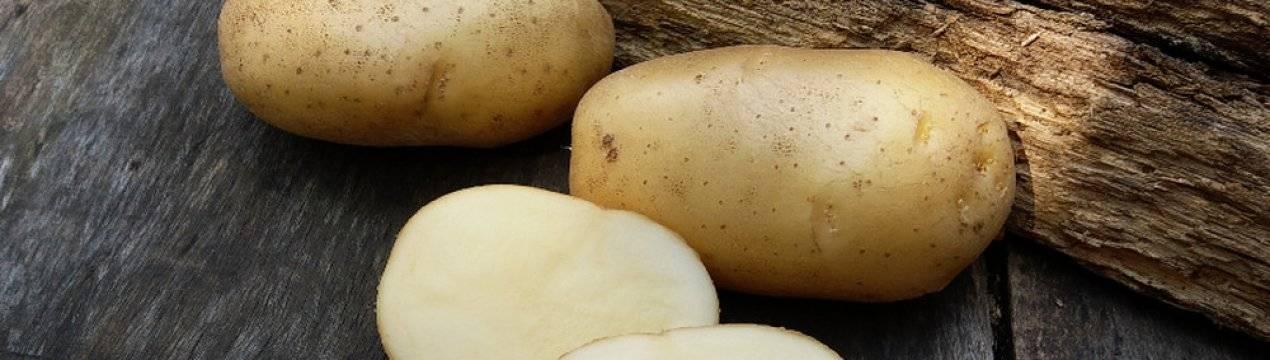 Картофель невский ранний: характеристика и отзывы о сорте