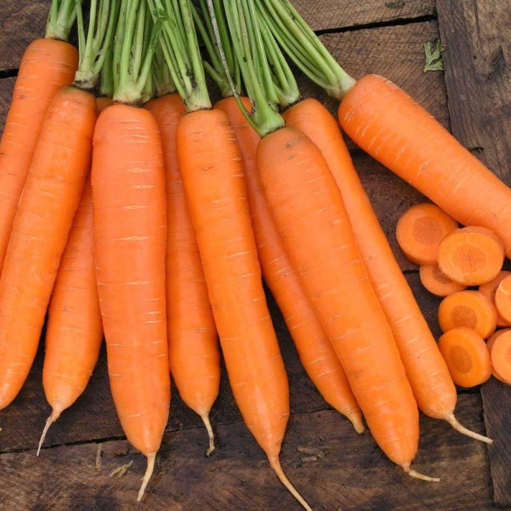 Морковь кантербюри f1