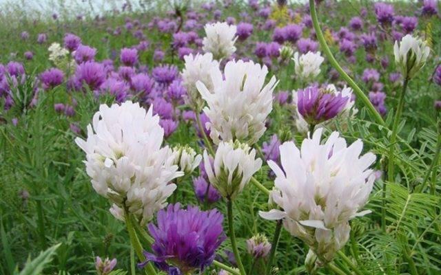Названия, описание и фото сорняков, которые можно встретить в огороде