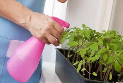 Как поливать рассаду перекисью водорода