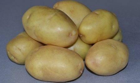 Картофель импала - особенности сорта