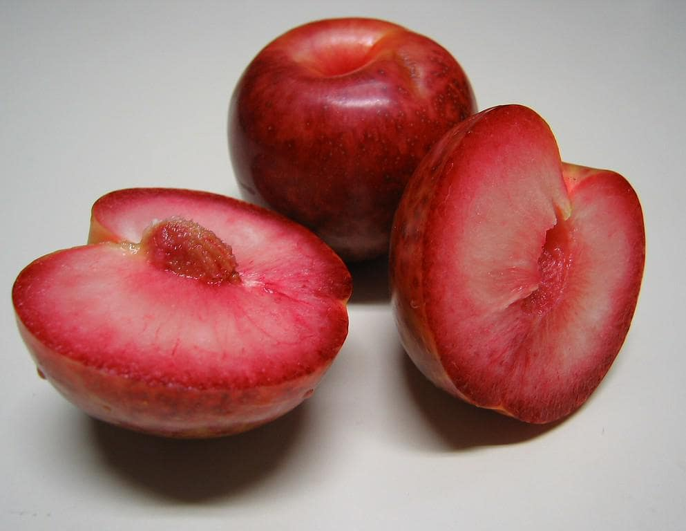 Слива абрикосовая: описание сорта, фото, отзывы