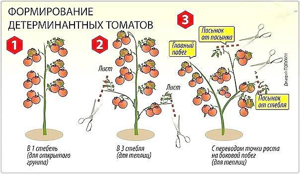 Как формировать детерминантные помидоры в теплице