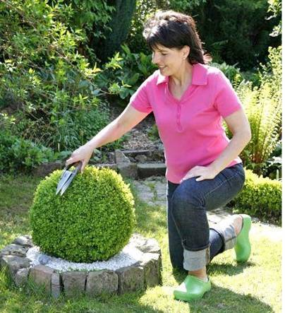 Когда лучше сажать самшит весной или осенью