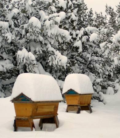 Зимовка пчел на воле, за и против | практическое пчеловодство