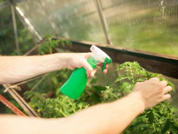 Перекись водорода для рассады: полезно ли это?