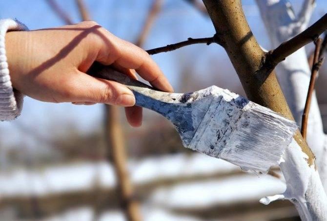 Болтушка из глины для саженцев. лечебная болтушка для садовых деревьев. лечебная болтушка для деревьев