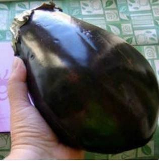 Выращивание баклажана щелкунчик
