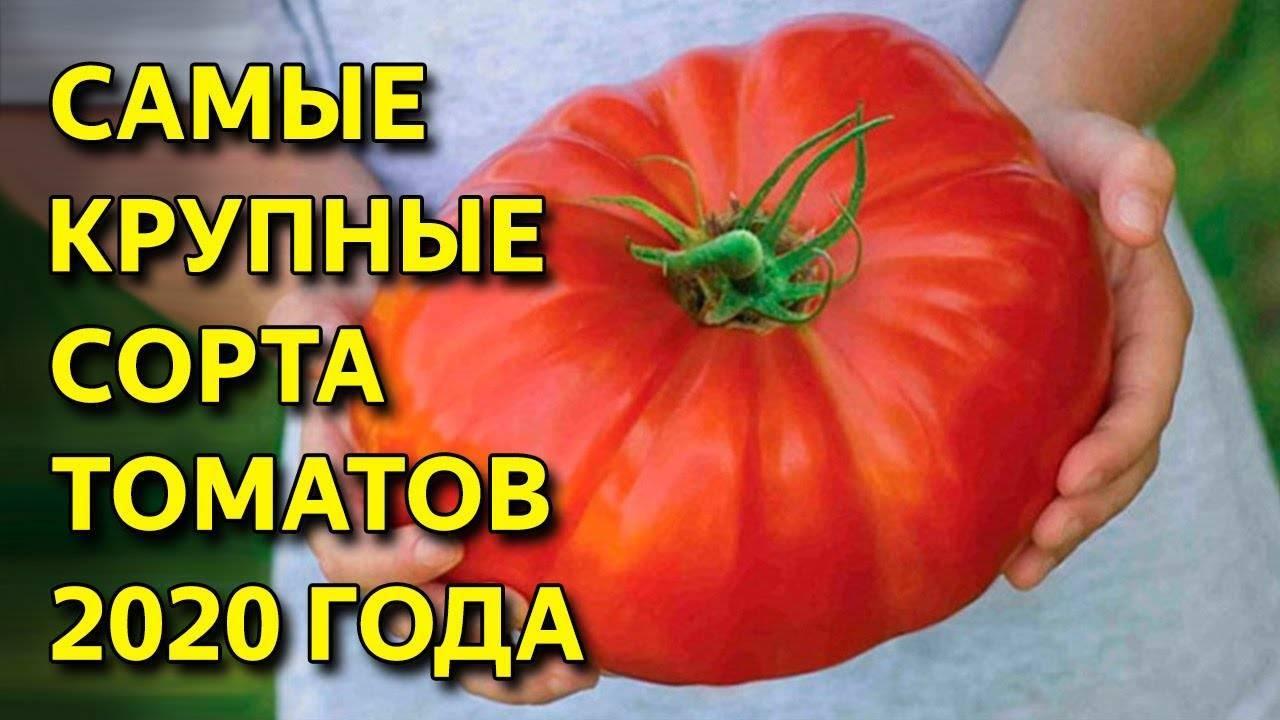 Семена томатов сибирский сад: каталог с описанием