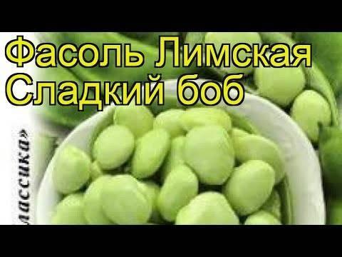 Фасоль лимская: характеристика сорта, выращивание и уход, фото