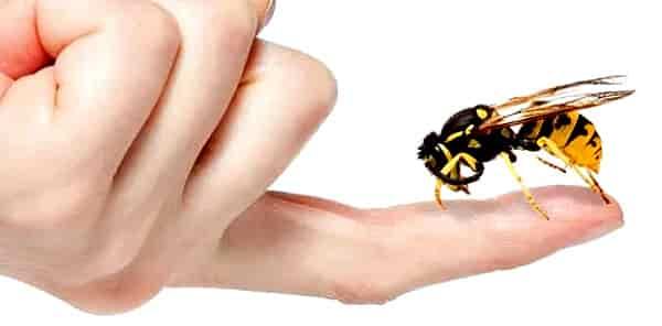 Укусила пчела — симптомы, польза, вред и лечение последствий. ответственность при содержании пчел (70 фото)
