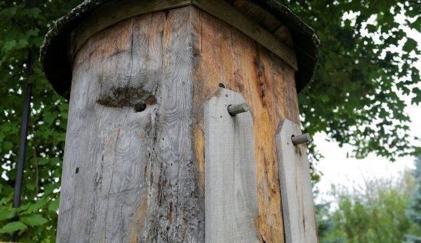 Колодное пчеловодство — лучший вариант для начинающих пасечников