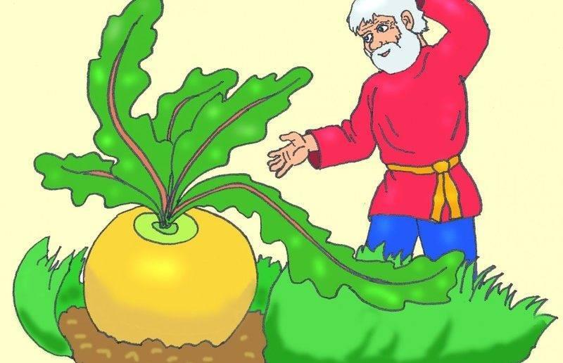 Репа — выращивание и уход в открытом грунте. когда сажать репу из семян