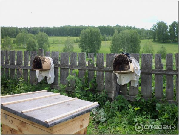 Апирой: инструкция по применению в пчеловодстве