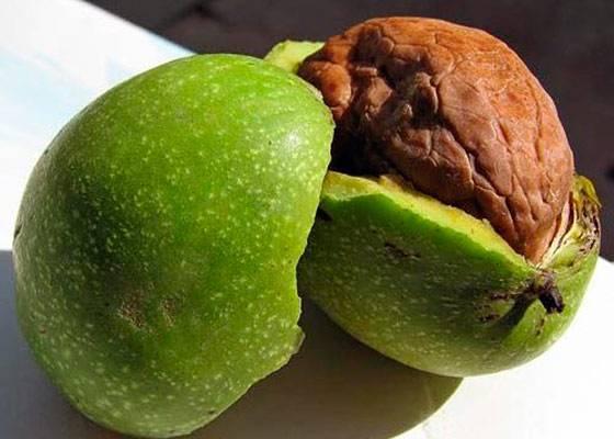 Особенности сорта ореха идеал