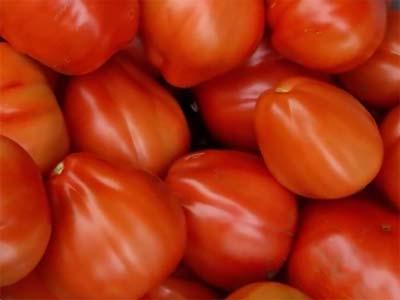 Характеристика и описание сорта томата стопудовый сибирской серии