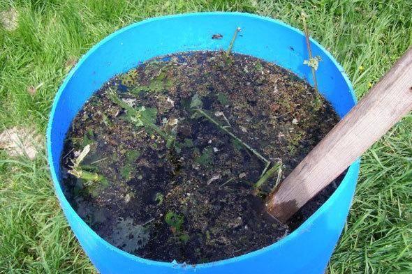 Зеленое удобрение из крапивы для растений: как его приготовить и применять?