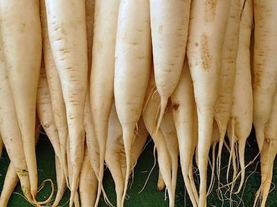 Сорта редиса: описание и фото, разновидности хороших семян для открытого грунта, самых ранних и скороспелых, устойчивых к стрелкованию, сладких и вкусных видов