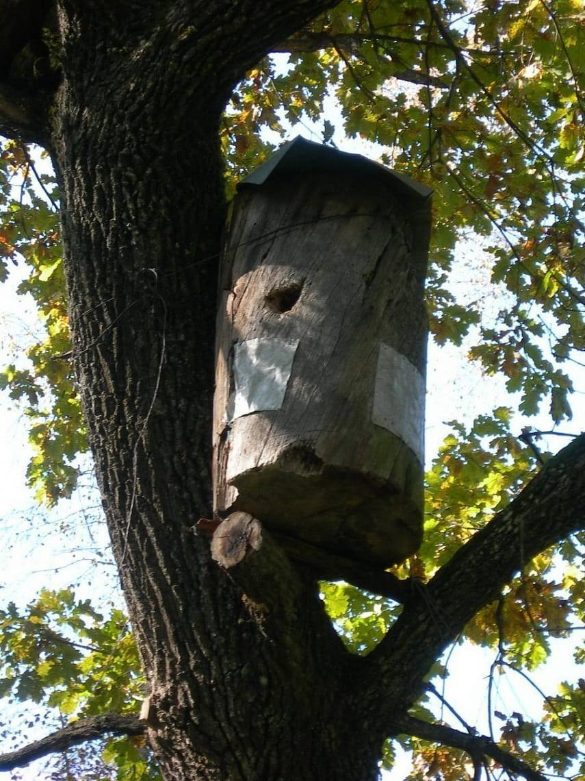 Бортевое пчеловодство
