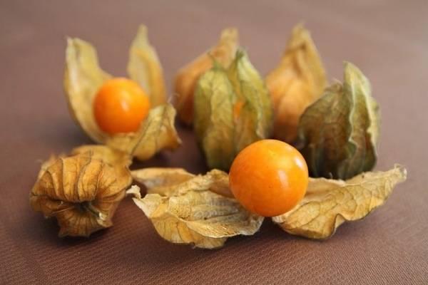 Физалис: виды и сорта, особенности выращивания