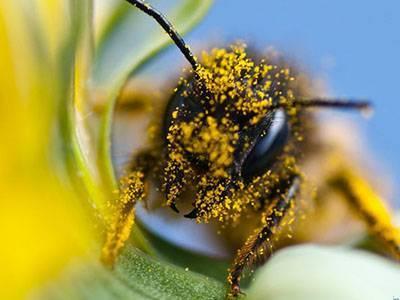 «апирой»: инструкция по применению в пчеловодстве