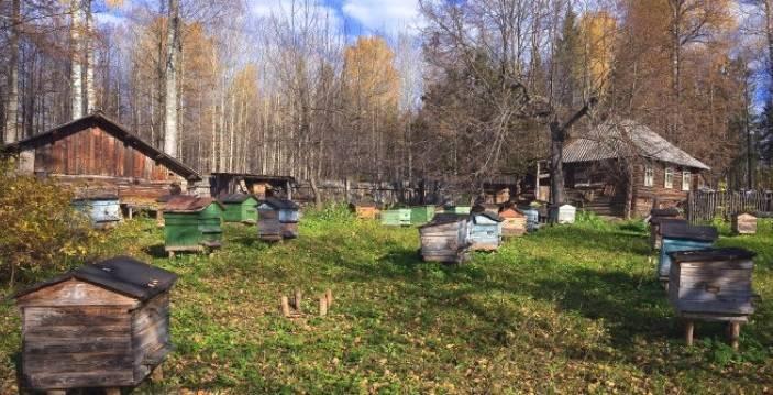 Что такое омшаник для пчел: как сделать зимовник для пчел своими руками