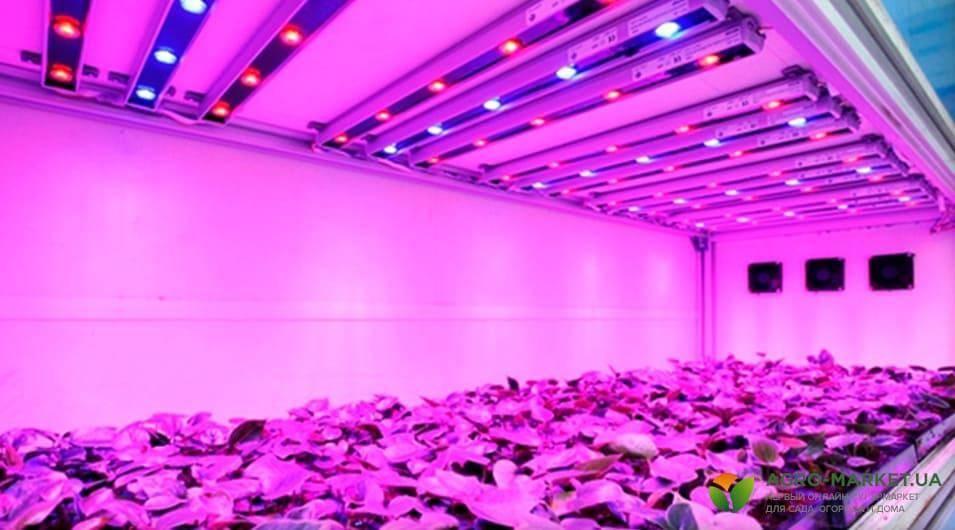 9 советов, как выбрать правильную светодиодную фитолампу для рассады
