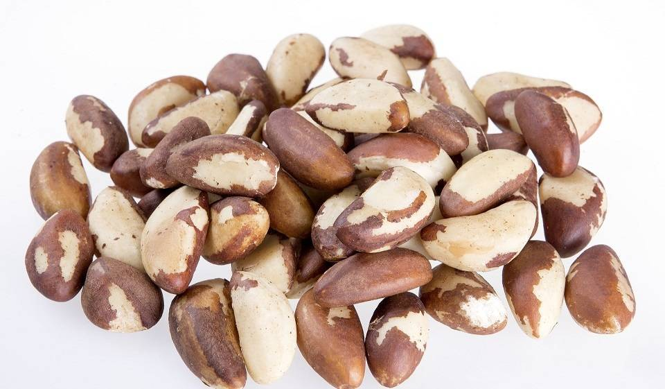 Кедровые орехи: полезные свойства  и противопоказания, калорийность, состав