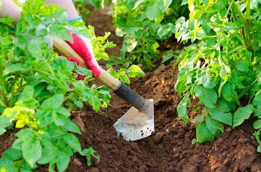 Хорошее средство от сорняков. уксус с солью: инструкция, отзывы. лучшее средство от сорняков