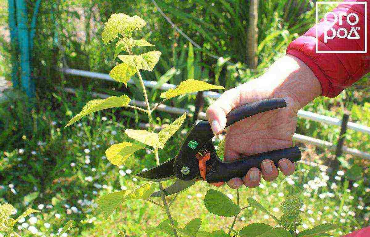 В какое время сажать топинамбур и когда это лучше делать в разных регионах?