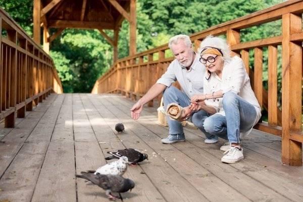 Сколько живут голуби: в городе, на улице, в домашних условиях