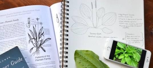 Безвременник великолепный: описание и выращивание