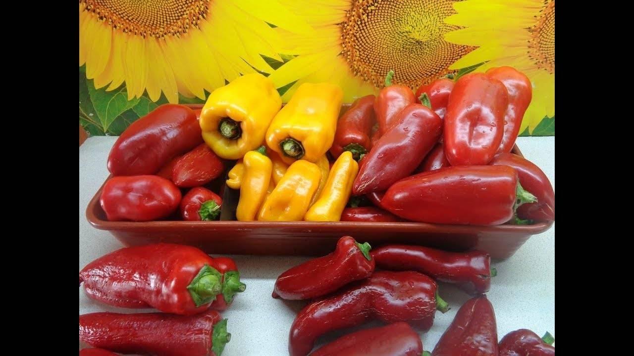 Самостоятельная заготовка семян перца