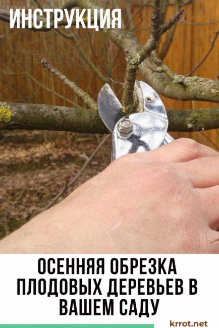Обрезка деревьев осенью: готовим сад к зиме