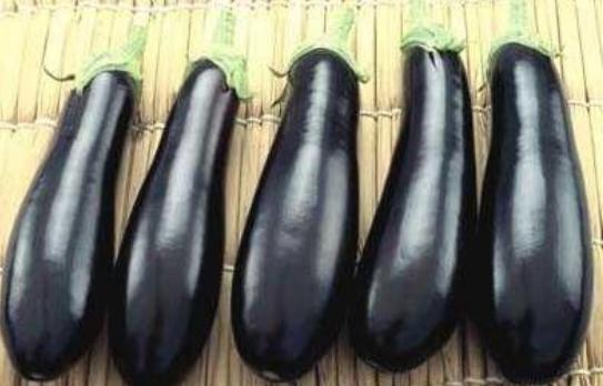 Баклажан рома f1: описание и характеристика сорта, урожайность с фото